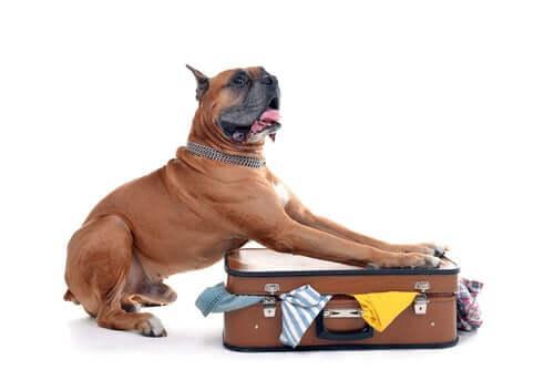 Aspects juridiques du passage d'un chien à la douane
