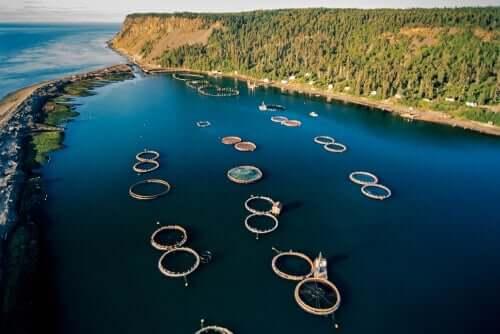 Des bassins d'élevage de saumons