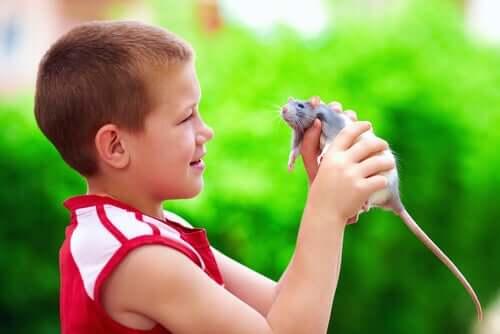 Un enfant tenant un rat de compagnie