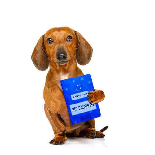 Un chien tenant son passeport européen pour passer à la douane