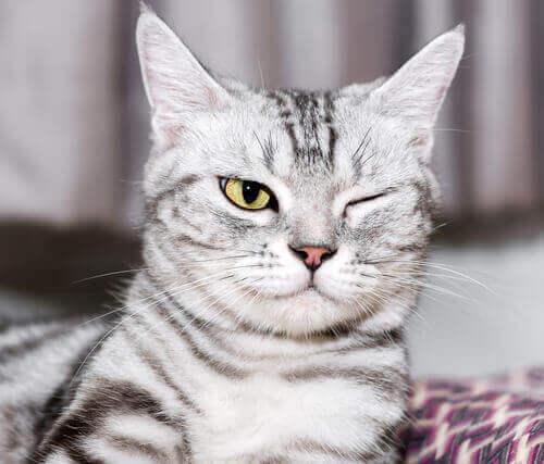 Un chat ayant des problèmes oculaires