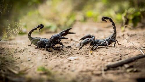 Les scorpions : 8 données que vous devez connaître