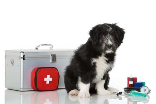 Comment fabriquer une trousse de premiers soins pour mon animal