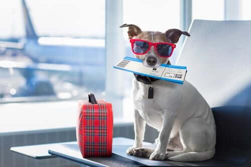 Un chien passant à la douane