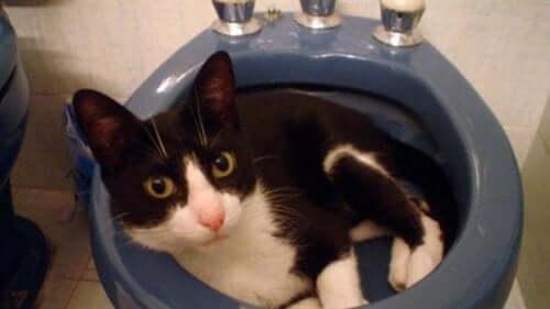 Muki : le chat qui a utilisé ses 7 vies