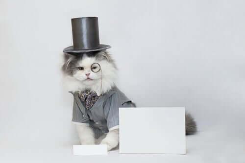 Un chat représentant les animaux stars médiatiques