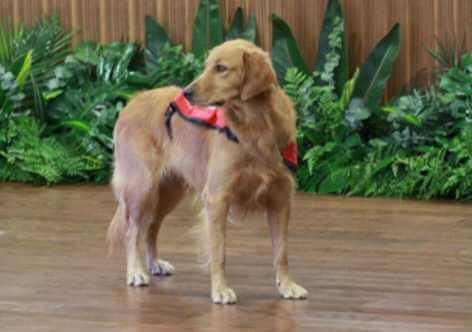 Happy, un chien qui calme les enfants qui vont à une audience