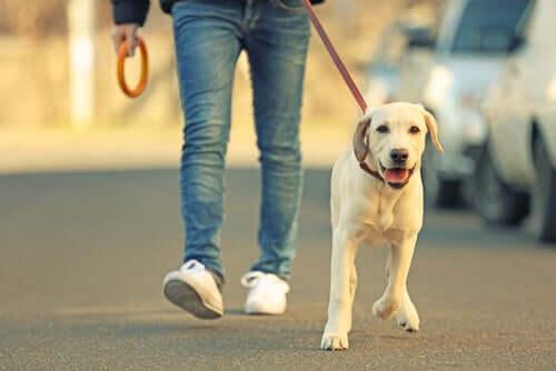 Un maître promène son chien en laisse.