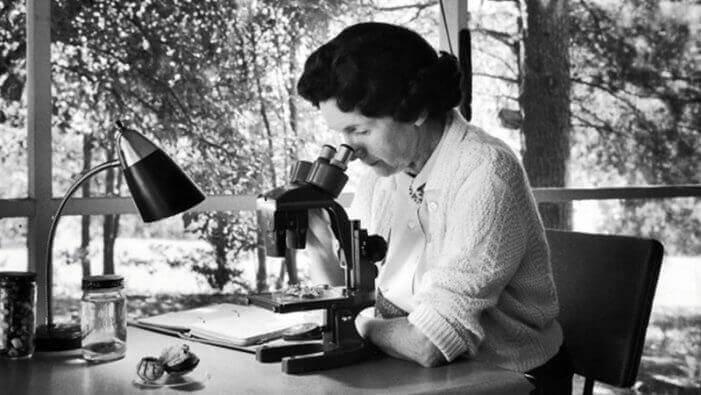 Rachel Carson utilisant un microscope