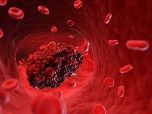 Caillots sanguins : risques pour le chien