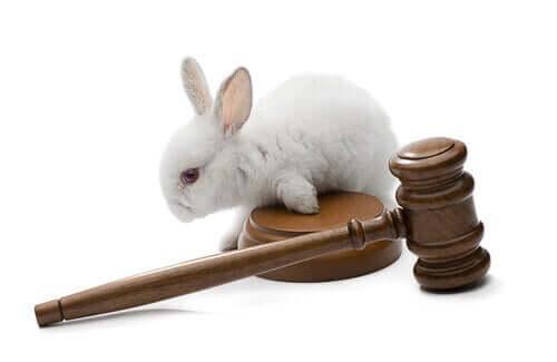 Un lapin et un marteau de la justice représentant la protection animale