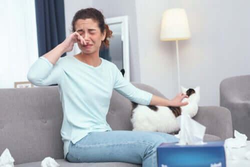 12 conseils pour une personne allergique aux chats