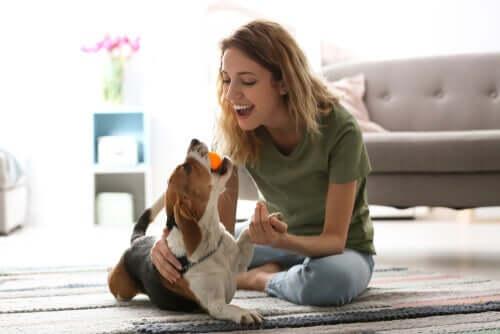 Jouer avec son chien pour l'occuper pendant la quarantaine