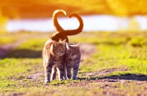 Le langage de la queue du chat