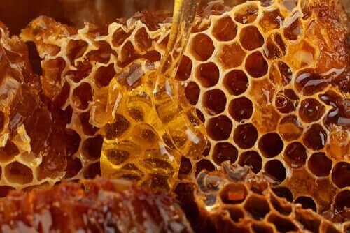 Les alvéoles d'une ruche