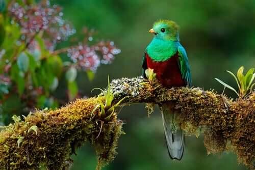 Le légendaire quetzal de Mésoamérique