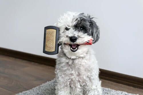 Brosser votre chien pour son bien