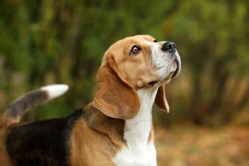 Les feuilles d'olivier peuvent être des antibiotiques pour chiens