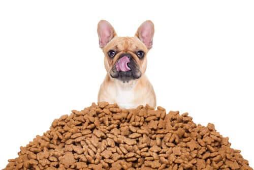 Calculer au mieux les portions de nourriture de votre chien