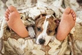 Est-il risqué de dormir avec son animal domestique ?