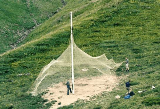 L'installation de filets de capture du chamois
