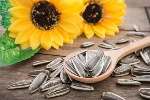 3 bienfaits des graines de tournesol pour vos animaux