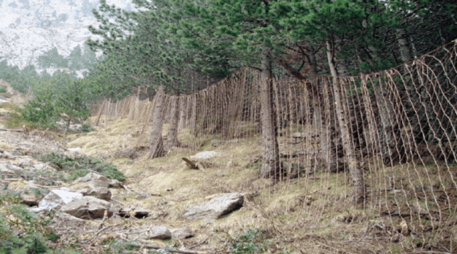 Des filets dans la forêt permettant de capturer les chamois