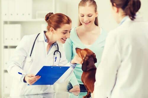 Un chien examiné par des vétérinaires pour vérifier qu'il n'a pas le coronavirus