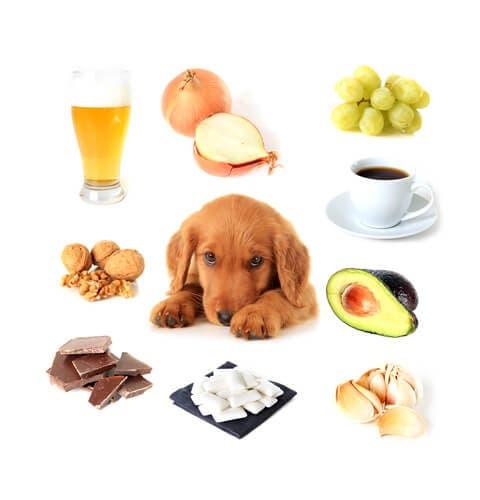 Quels sont les aliments toxiques pour les chiens ?