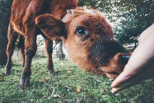 Connaissez-vous le Centre juridique espagnol pour la défense des animaux ?