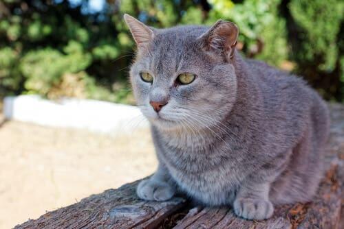 Parmi les animaux domestiques qui vivent le plus longtemps, on peut compter les chats