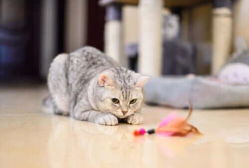 Un chat en train de jouer