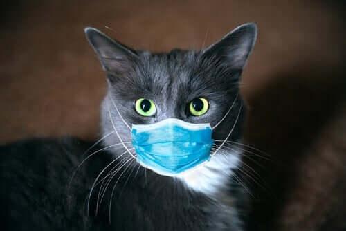 Un chat ayant le coronavirus portant un masque chirurgical