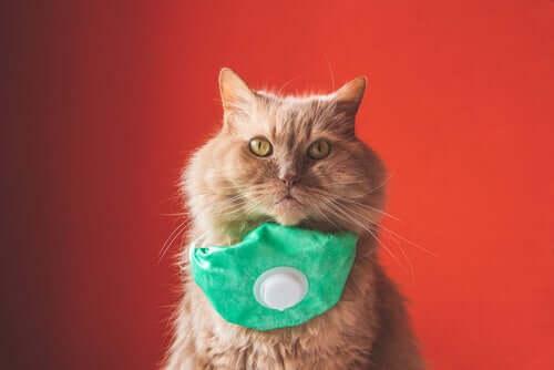 Un premier chat atteint du coronavirus en Espagne