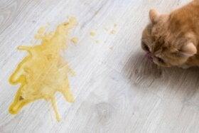 Nausées chez les chats : causes et traitements