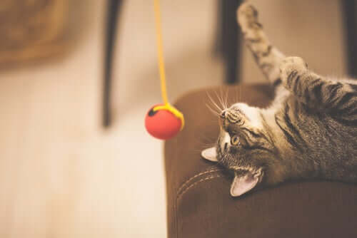 Le stress des chats pendant le confinement
