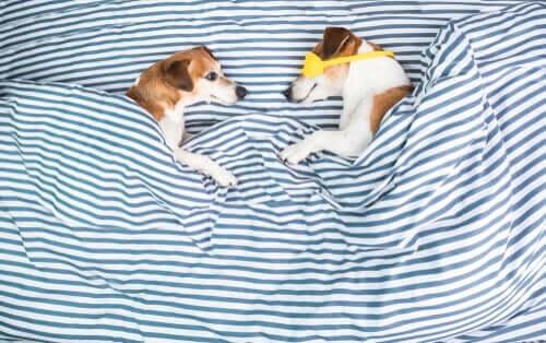 Deux chiens ayant des troubles du sommeil