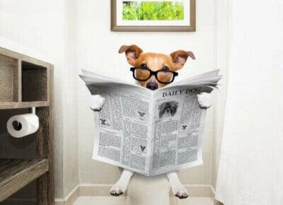 Méthodes pour stopper la diarrhée chez les chiens