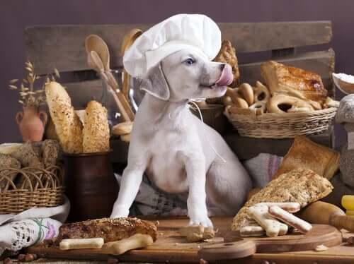 Les glucides sont-ils mauvais pour les chiens ?