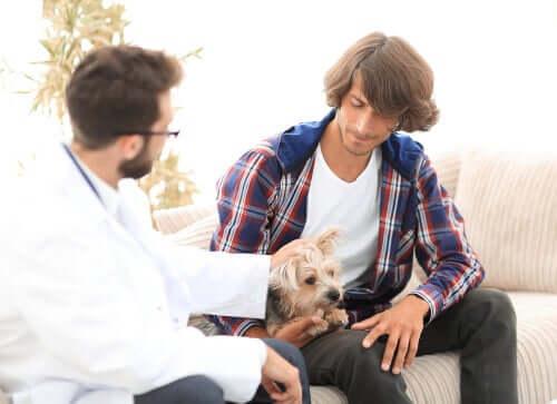 Comment l'hyperparathyroïdie affecte les chiens ?