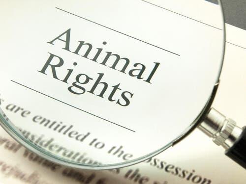 Les animaux ont aussi des droits.