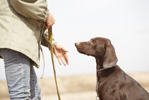 Un homme dressant un chien
