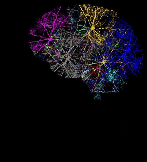 La psychobiologie dans le cerveau humain