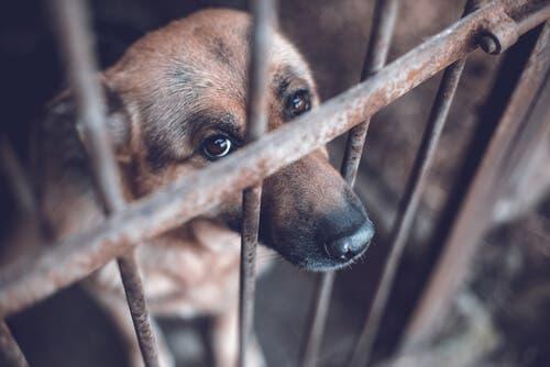 La maltraitance animale doit être dénoncée.