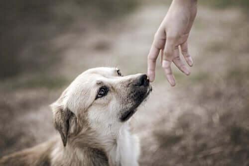 Des études scientifiques ont été menées sur l'odorat des chiens et le lien avec les émotions