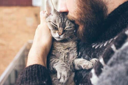 Un chat faisant un câlin à son maître