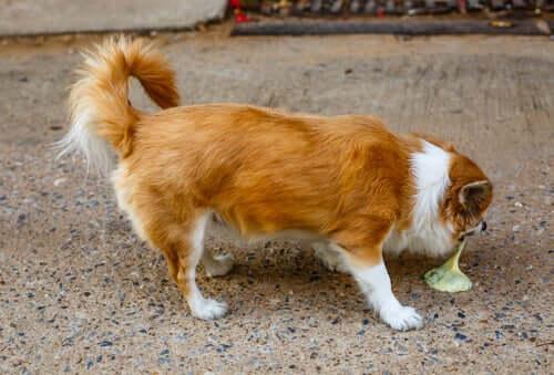 Types de vomissements chez les chiens : ce qu'il faut surveiller