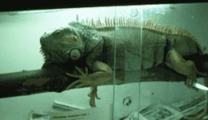 Il est essentiel de préparer l'habitat avant d'acheter un reptile