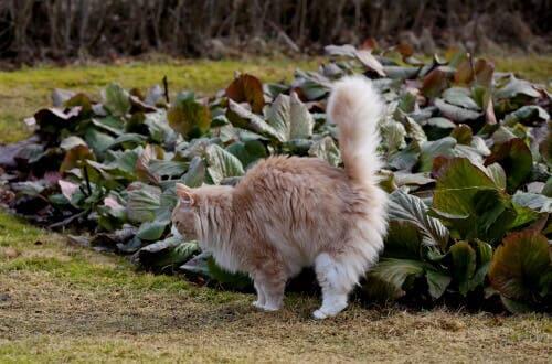 L'urine d'un chat sur des plantes