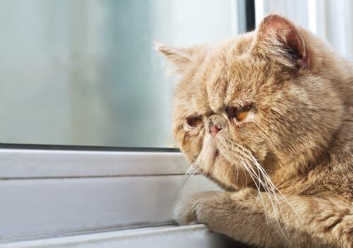 Un chat regardant par la fenêtre en hiver